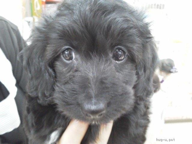 犬 里親 大阪 小型