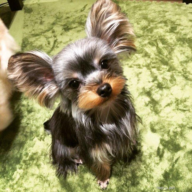小型 犬 里親 大阪