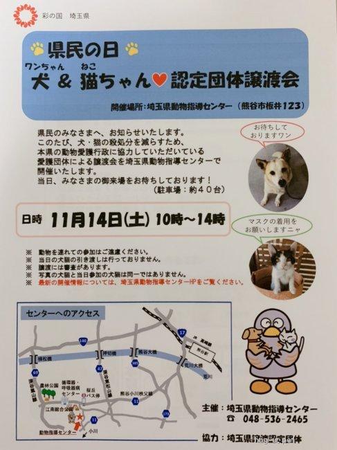 埼玉 保護 犬