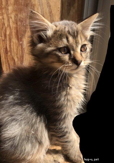 【里親募集詳細】岡山県 猫 雑種 ID:1904-00030|ハグー‐みんなの ...