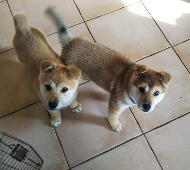 徳島 保護 犬