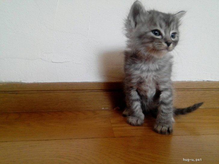 生後 一 ヶ月 子猫 里親 募集